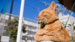 Www.getbg.net 2017animals   cats a beautiful red cat is basking in the sun 116897 - Udm-info.Ru
