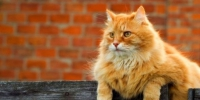 Red cat 03 650x422 - Udm-info.Ru