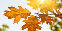 Autumn leaves in the sun of light - Udm-info.Ru