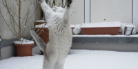 Cat dancing in the snow tscherno - Udm-info.Ru